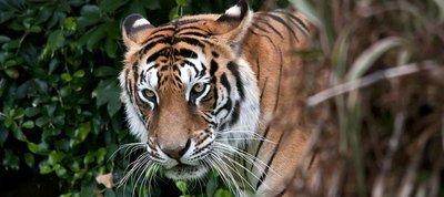 Package Tour Operator For Sundarban