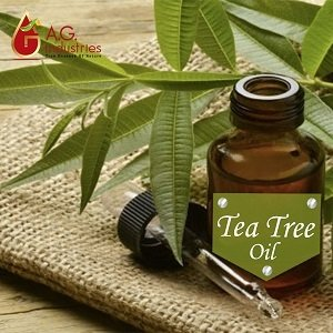 Tea Tree Oil Suppliers in India