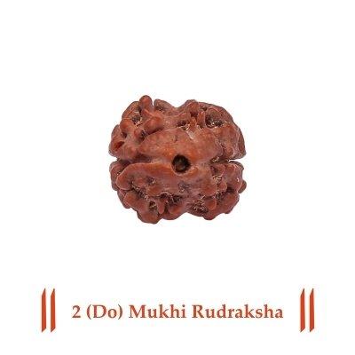 Siddh 2 (Do) Mukhi Rudraksha