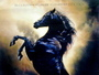 Young Black Stallion Movie Poster		SKU: ge-20948